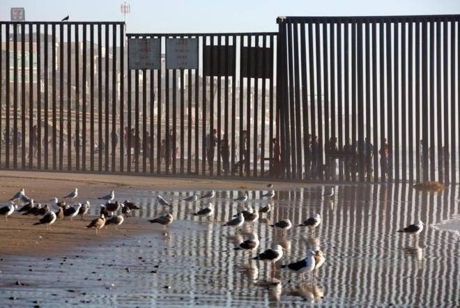 animales muro arizona trump
