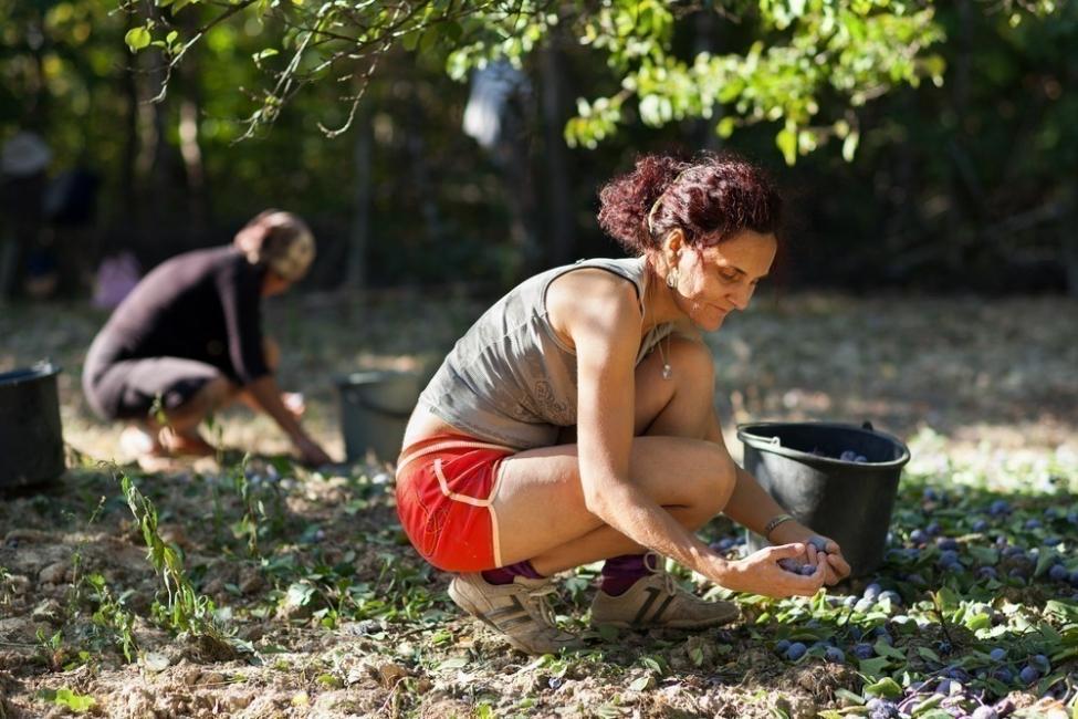 ONU las cosechasecológicas son la mejor forma de alimentar al mundo- informe