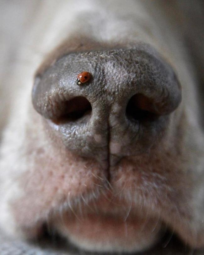 no es necesario controlar obsesivamente la boca de su perro