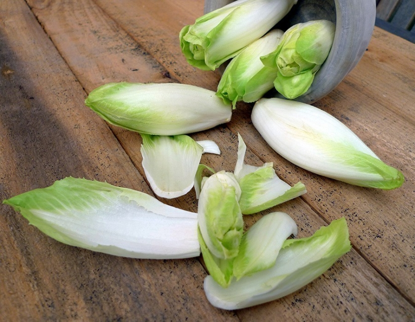 Cómo cultivar endibias o endivias- cosechadas