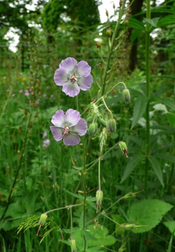 plantas-para-cultivar-bajo-los-arboles-04-e1383415871496