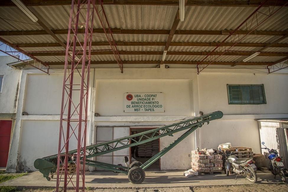 arroz orgánico  - arroz orgánico - producción
