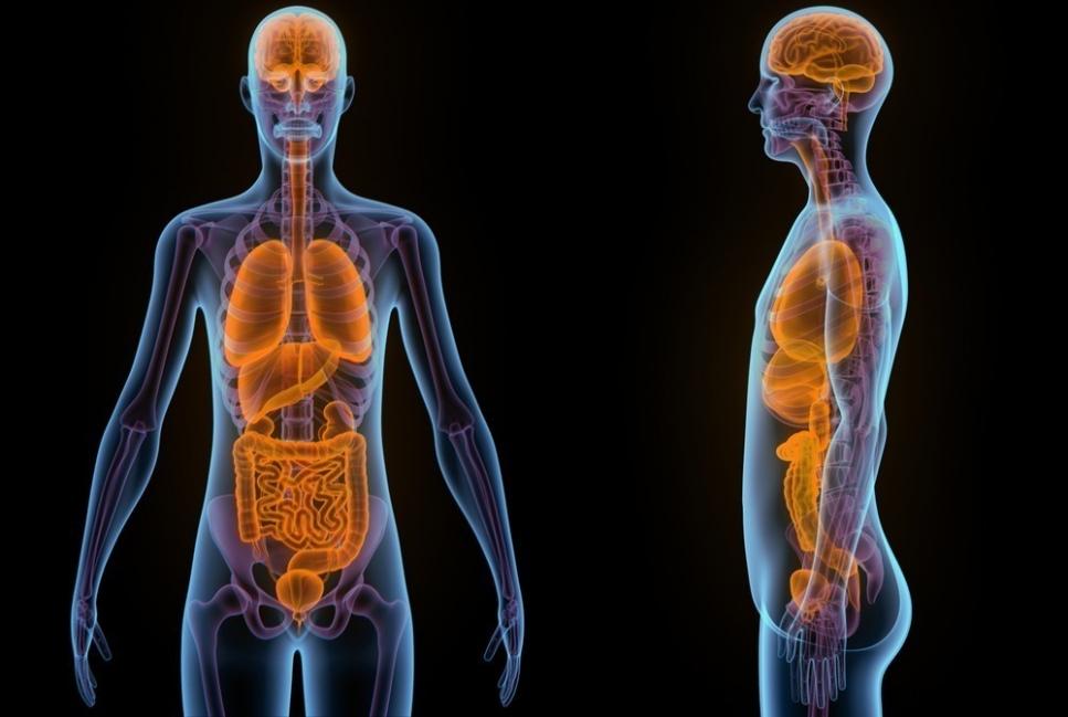 prevenir enfermedades con  curcuma