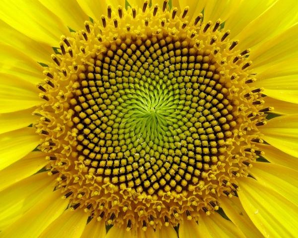 plantas-geometricas-11