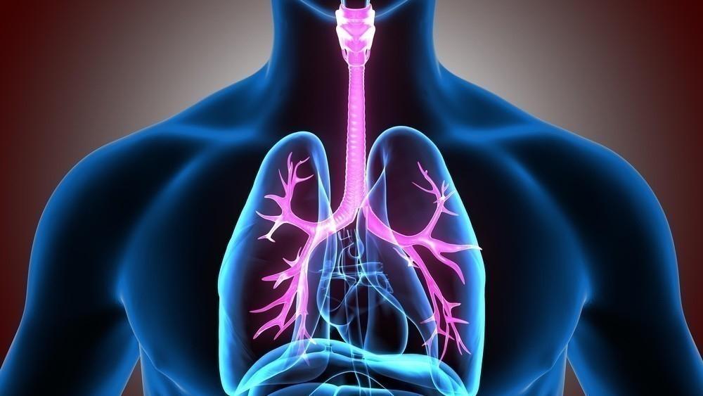 corazon organos significado