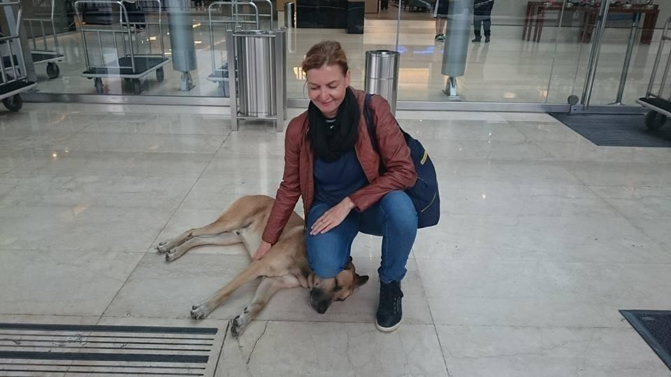 Este perro esperó en un hotel seis meses hasta conseguir que su elegida lo adoptase- historia de amor
