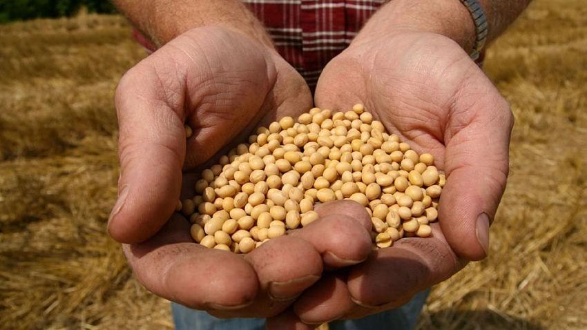 ley de semillas