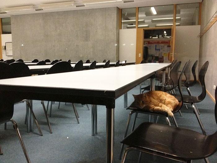 gato del campus- universidad alemania