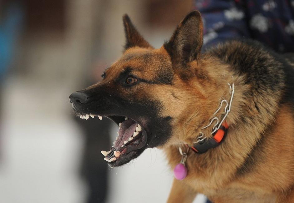 lenguaje corporal de los perros - enojo