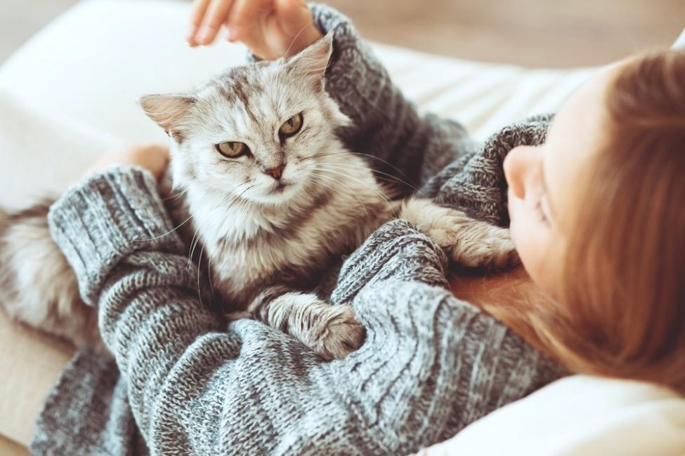 beneficios de tener un gato para la salud  - disnea