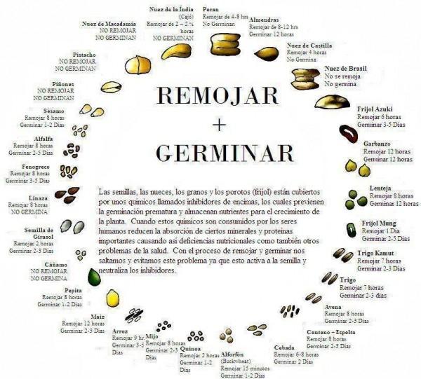 semillas germinan