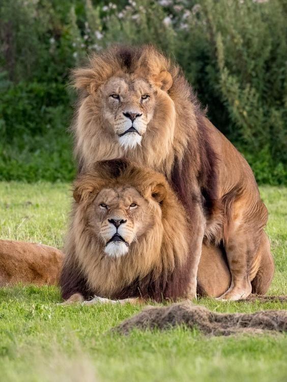 La imagen fue capturada en Yorkshire Wildlife Park