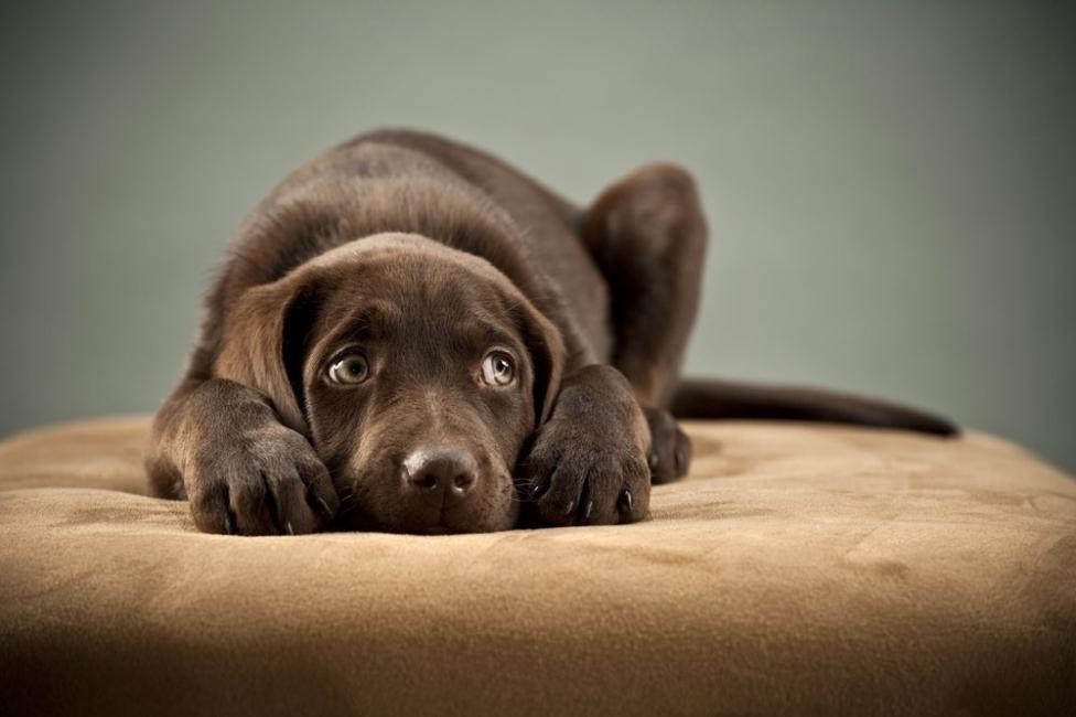 lenguaje corporal de los perros - miedo
