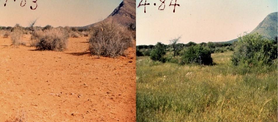desertificacion ganado
