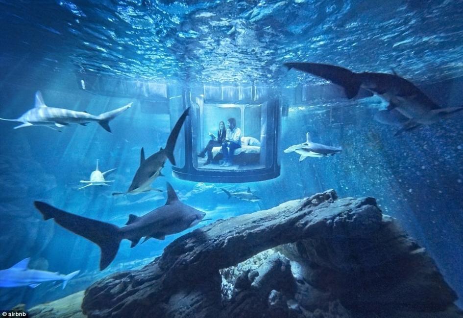 acuario tiburones