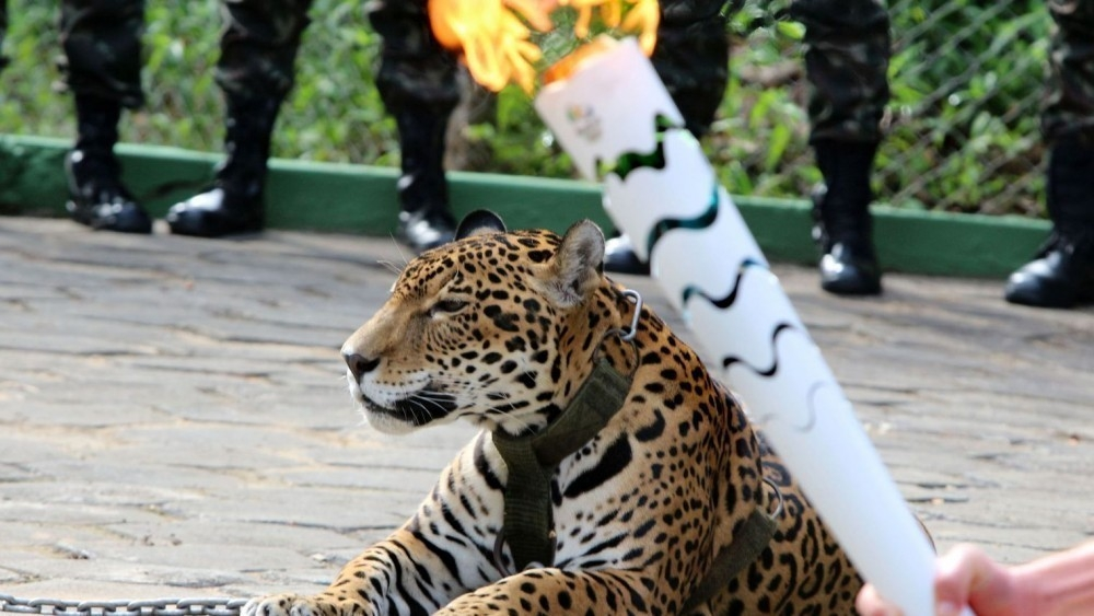 juma- jaguar asesinado juegos olímpicos