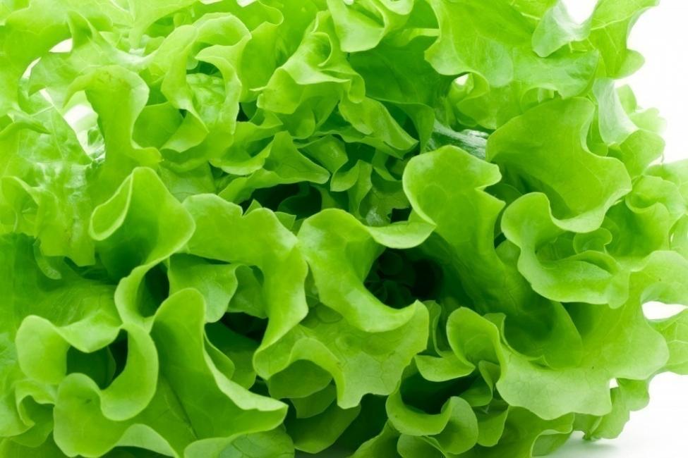 alimentos que alcalinizan nuestra sangre- hojas verdes