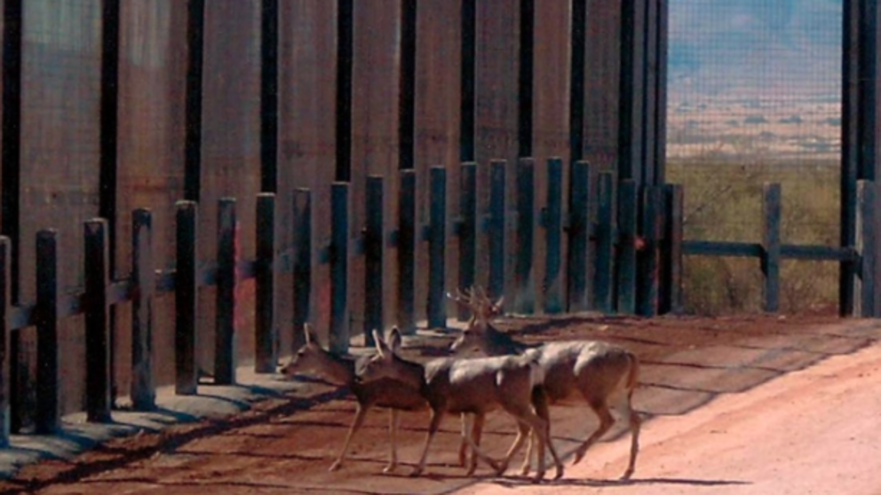 animales y muro en estados unidos