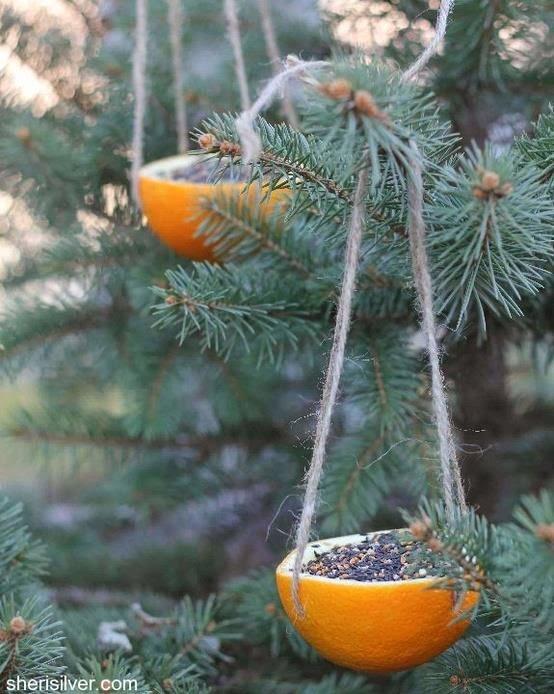 Usos para la c scara de naranja for Como quitar las hormigas del jardin
