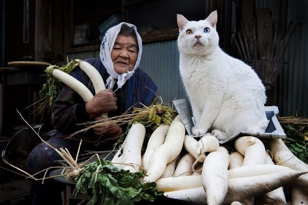 grandmother-and-cat-miyoko-ihara-fukumaru-7