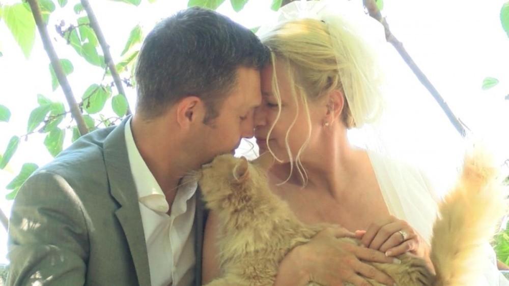 pareja se casó en un refugio para gatos