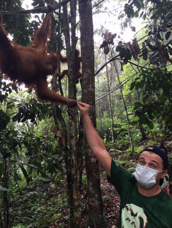 Leonardo DiCaprio orangutanes elefantes Sumatra