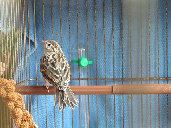 bird-day23