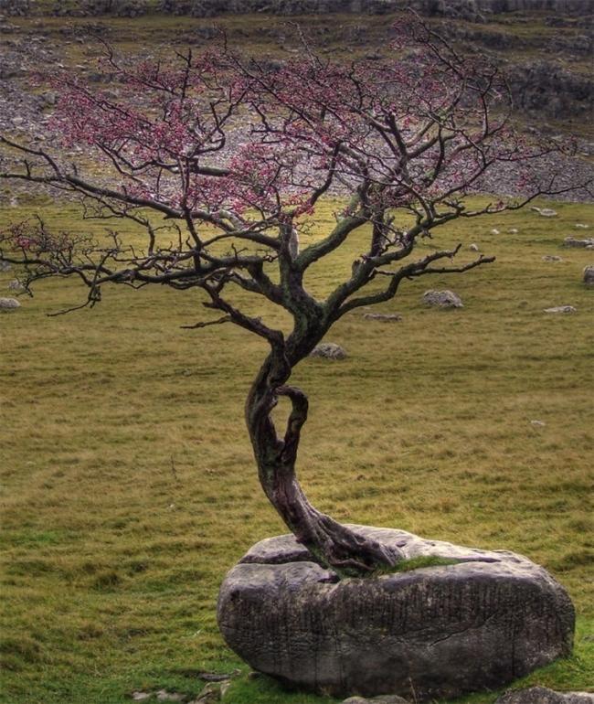 árbol sobre piedra