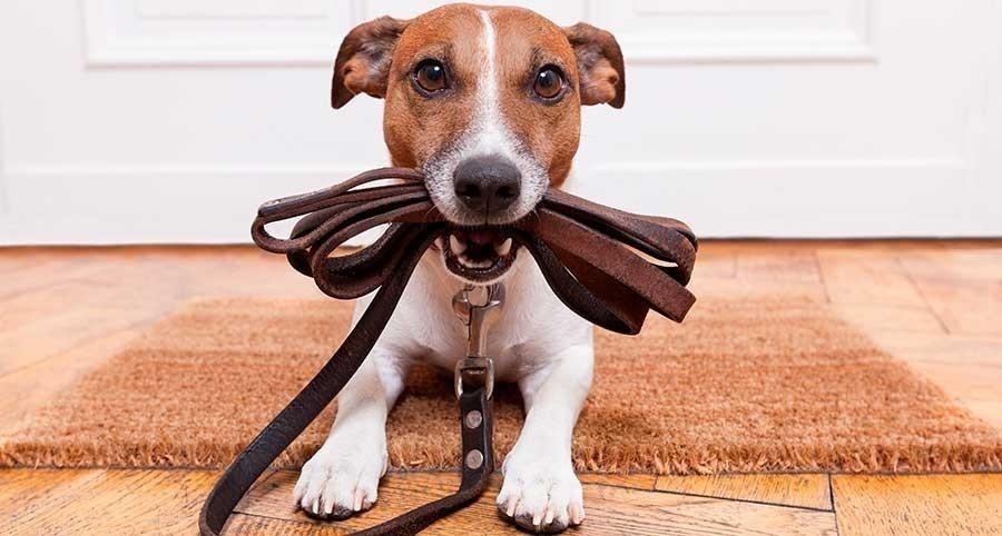 test inteligencia perro