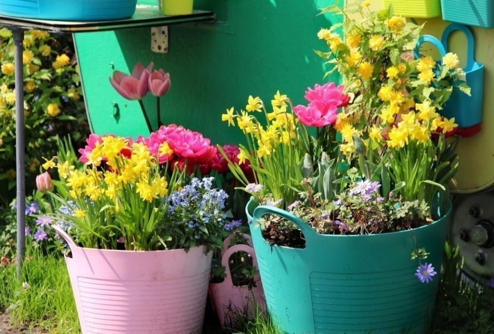 terraza de colores- plantas