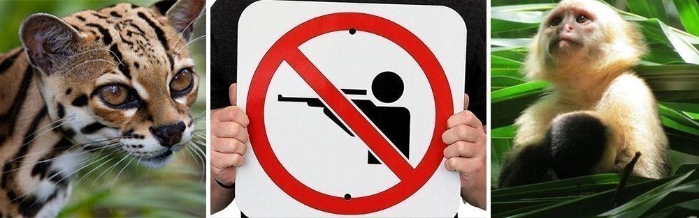 Costa Rica prohíbe la caza deportiva - prohibida la caza