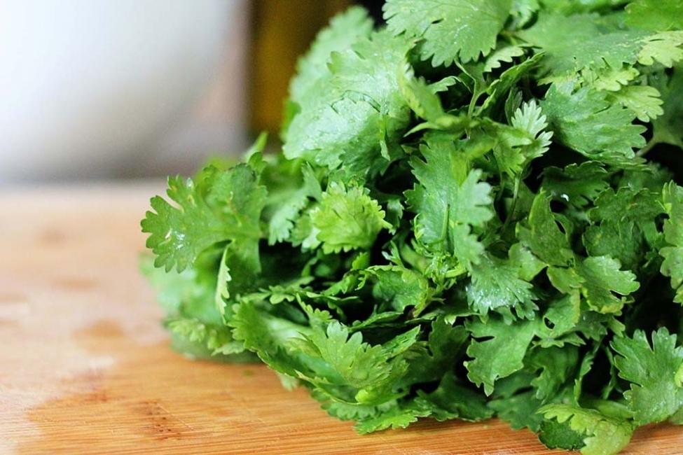 Vegetales y hierbas que puedes tener para siempre - cilantro