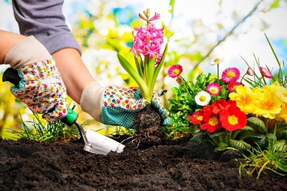 errores de jardineria