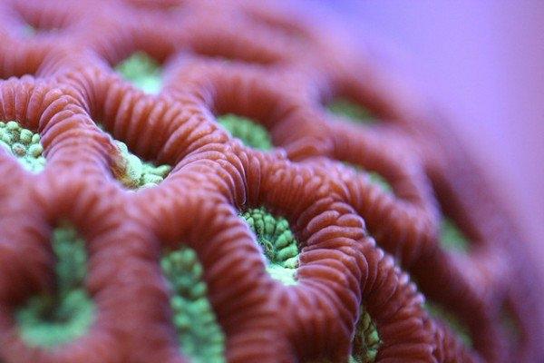 Macro-Shots-of-Underwater-Corals-6-600x400