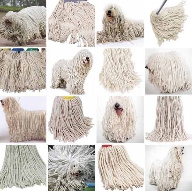 animales que parecen objetos por Karen Zack