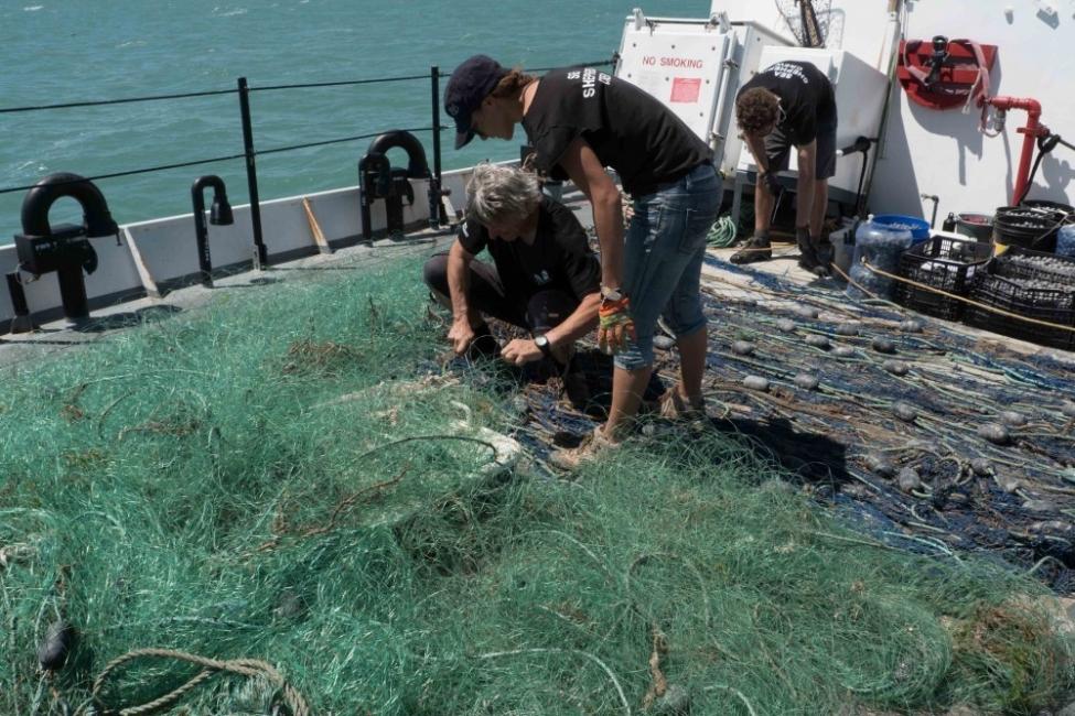 salvar a la vaquita marina