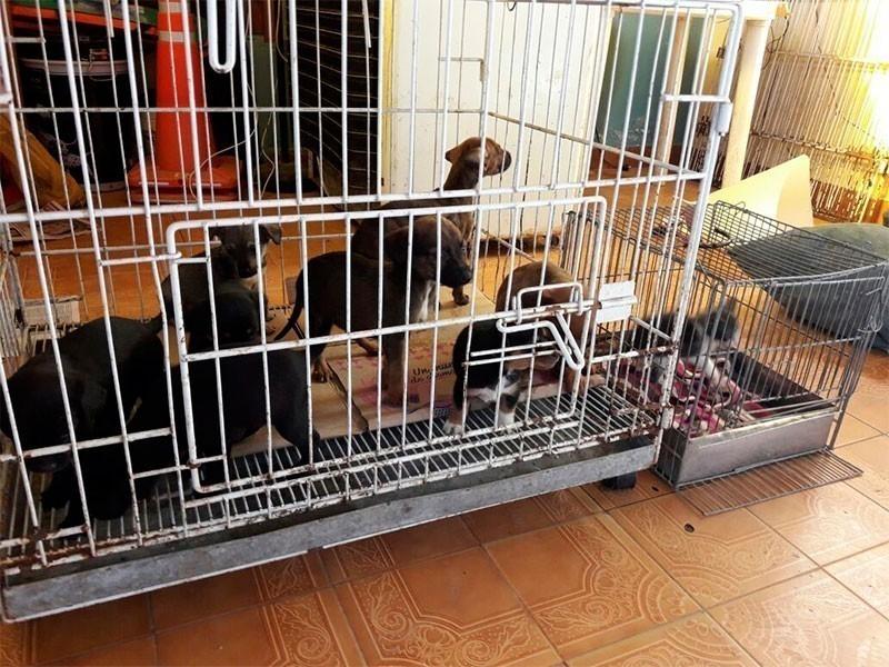 Los animales rescatados fueron revisados por veterinarios y llevados a refugios