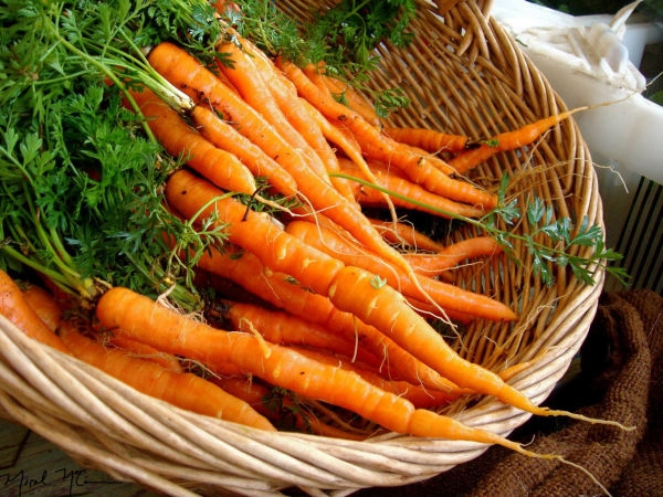 carrots-zanahoria-copy