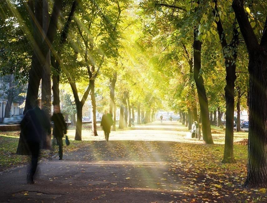 árbol urbano- beneficios