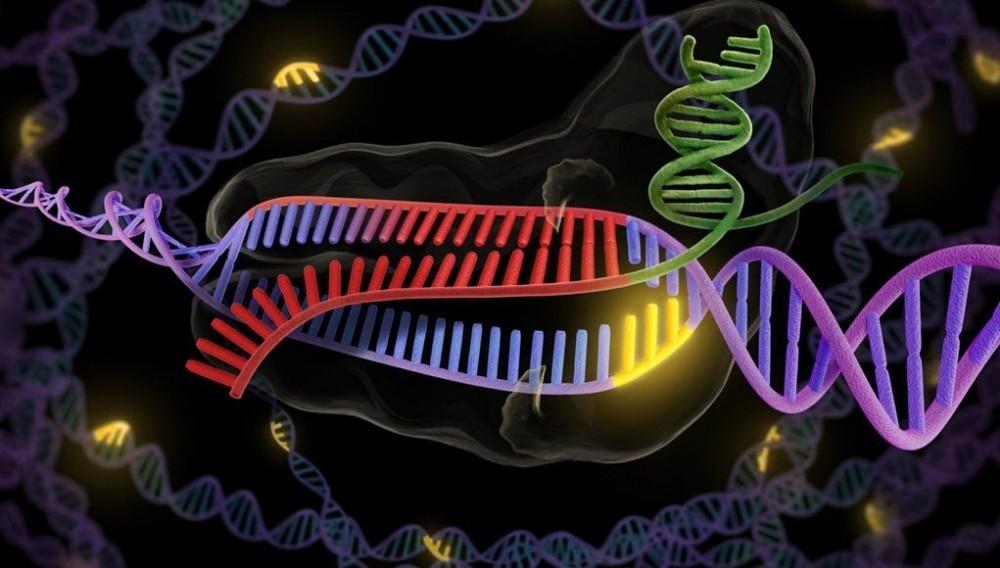 Investigadores encuentran la relación entre la carne roja y algunos tumores desarrollados en los humanos