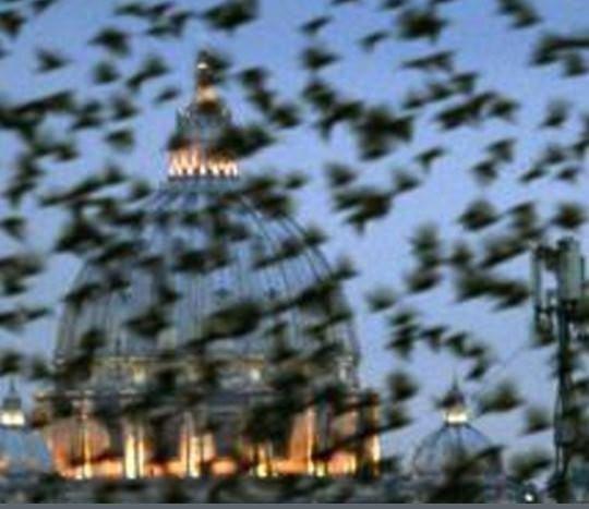 En los últimos años, los romanos han luchado por encontrar una forma de controlar a las aves que pululan