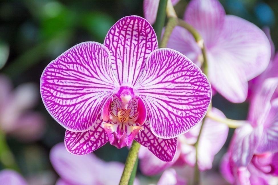Flores y personalidad - orquídeas