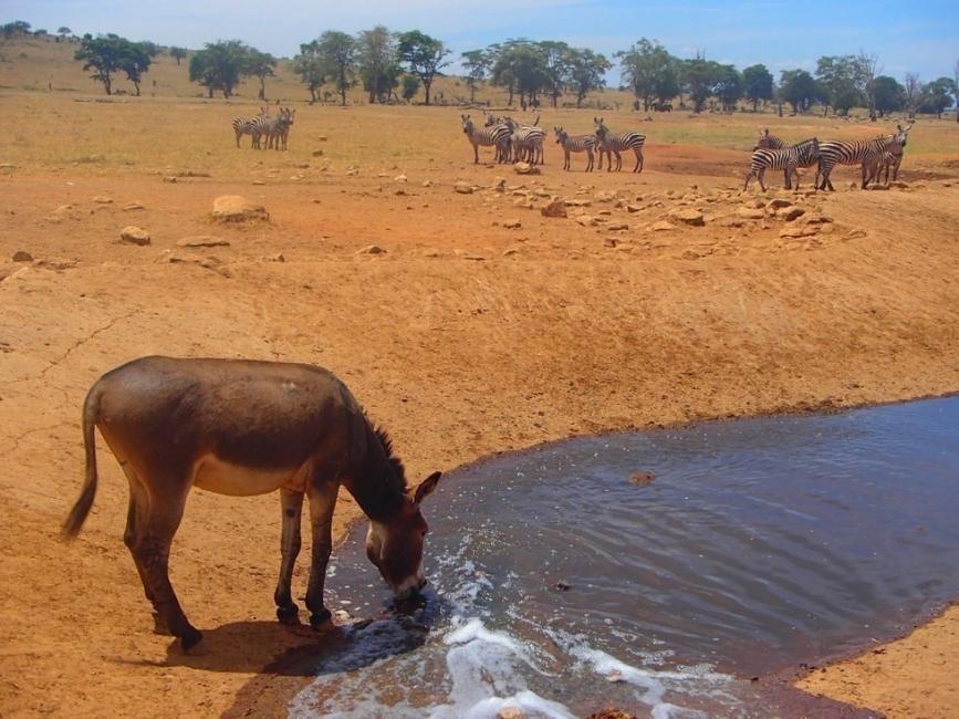 animales sedientos africa