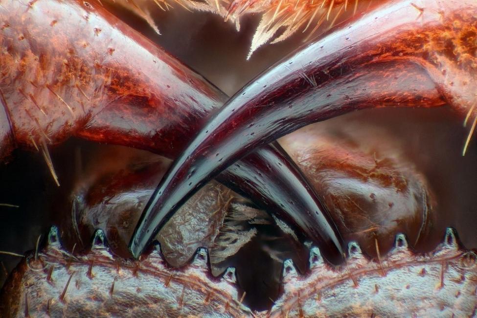 Increíbles fotografías de la realidad microscópica que nos rodea- 5