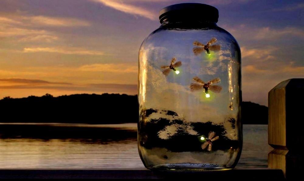 Consejos para atraer luciérnagas - frasco