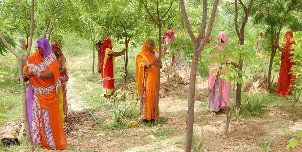 pueblo indio de Piplantri- mujeres y árboles- comunidad