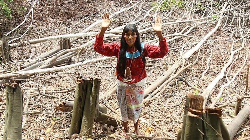 isla del amor amazonas guardian