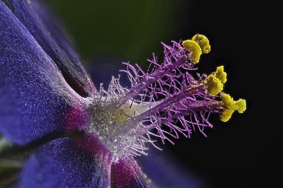 Increíbles fotografías de la realidad microscópica que nos rodea- 8
