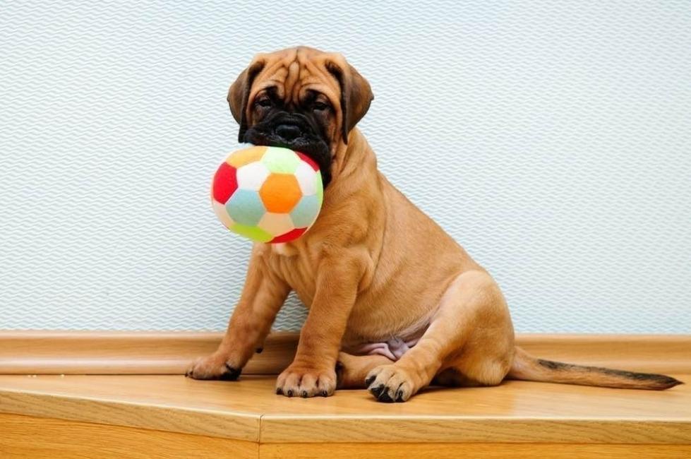 lenguaje corporal perros - jugar