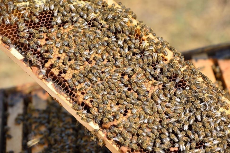 abejas auto